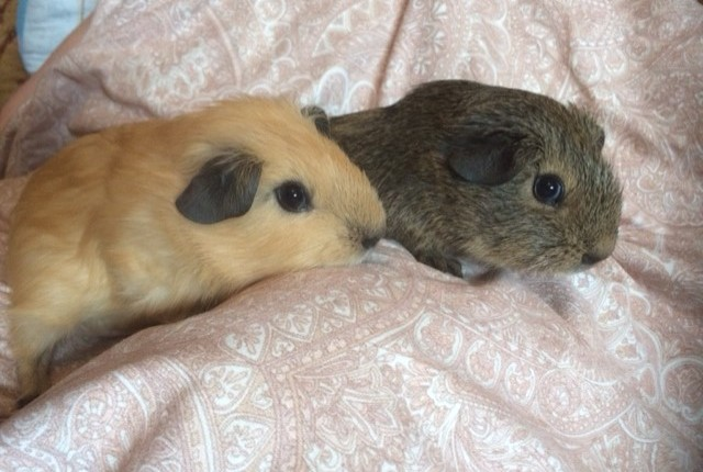 Guest Post: Using Social Media To Sell Guinea Pigs by Simon Holding
